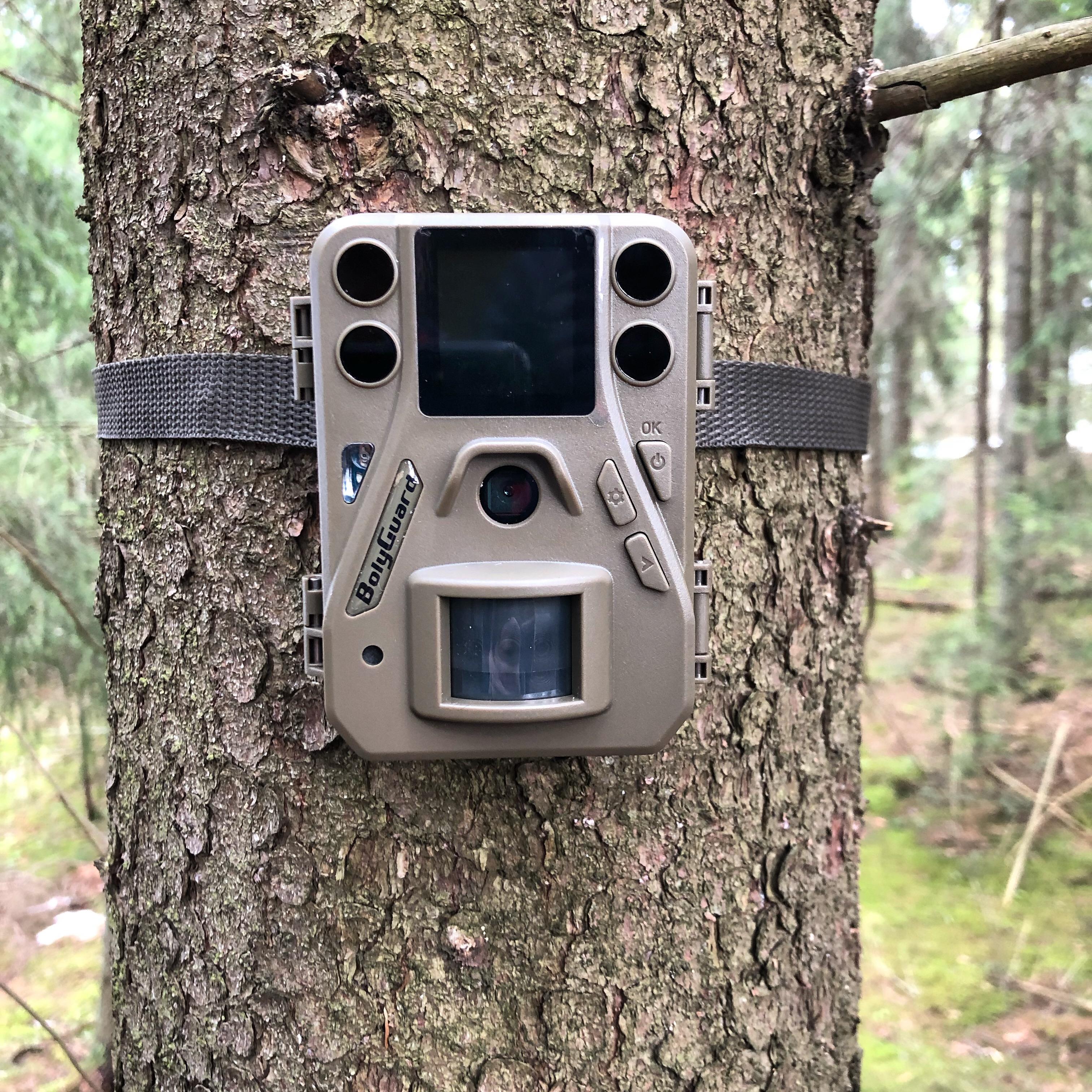 Riistakamera puussa